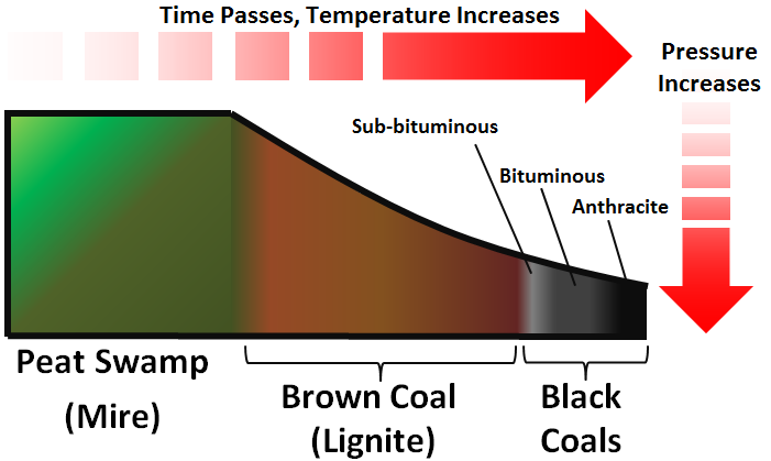 coal formation - energy education