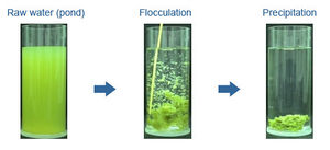 Harvesting algae - Energy Education